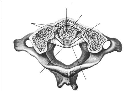 Срединный атланто-осевой сустав (articulatio atlantoaxialis mediana)