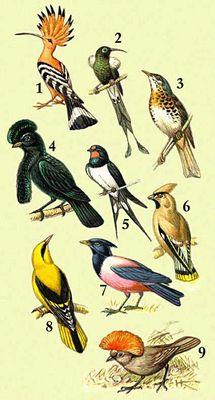 1 — удод; 2 — медосос мохо; 3 — дрозд-рябинник; 4 — зонтичная птица; 5 — деревенская ласточка; 6 — иволга; 7 — розовый скворец; 8 — свиристаль; 9 — шалашник.