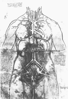 Леонардо да Винчи. Рисунки. Анатомическая штудия. Перо. сангина. Королевская библиотека, Виндзор.