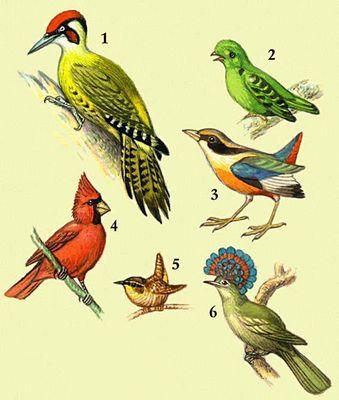 1 — зеленый дятел; 2 — малый зеленый рогоклюв; 3 — синекрылая питта; 4 — кардинал; 5 — крапивник; 6 — королевский тиран.