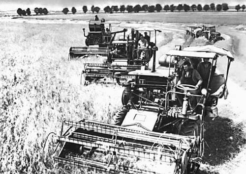 Уборка урожая в государственном хозяйстве «Котово».