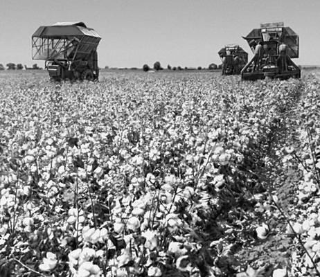 бесплатно сельское хозяйство в ссср фото длинной, пушистой