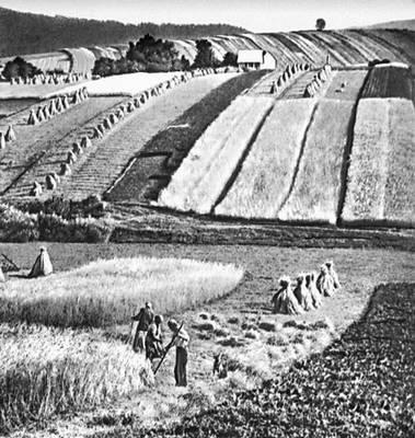 Уборка урожая на полях индивидуальных хозяйств.