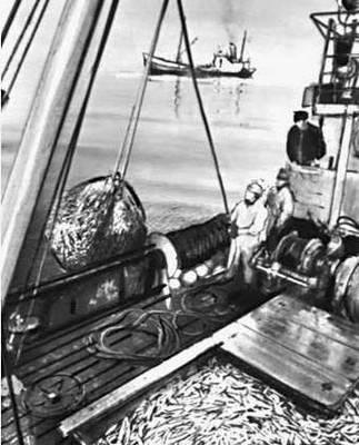 Прибрежный лов рыбы. Рыболовецкий колхоз «Хийу калур» в Хийумааском районе.