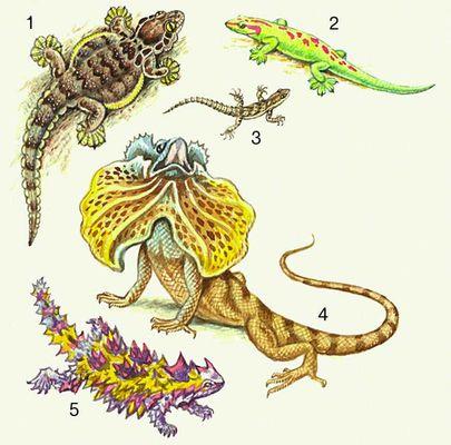 Ящерицы. 1. Лопастехвостый геккон. 2. Мадагаскарский геккон. 3. Средиземноморский геккон. 4. Плащеносная ящерица. 5. Молох.