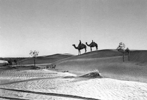 В пустыне Каракумы.