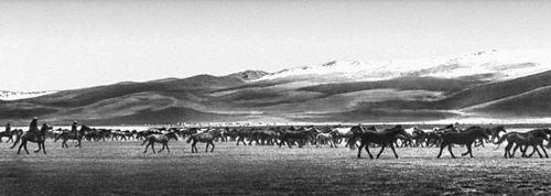 Нарынская область. Табун лошадей колхоза имени Жданова Кочкорского района на пастбище у озера Сонкёль.
