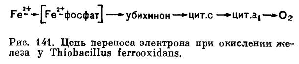 Железобактерии