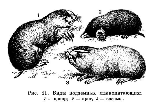 Биология млекопитающах