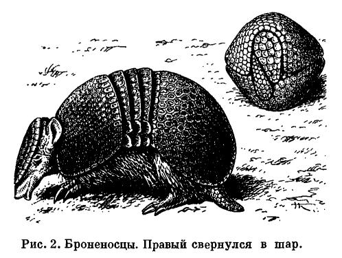 Строение млекопитающих
