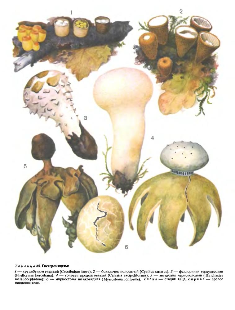 Гастеромицеты-лигнофилы