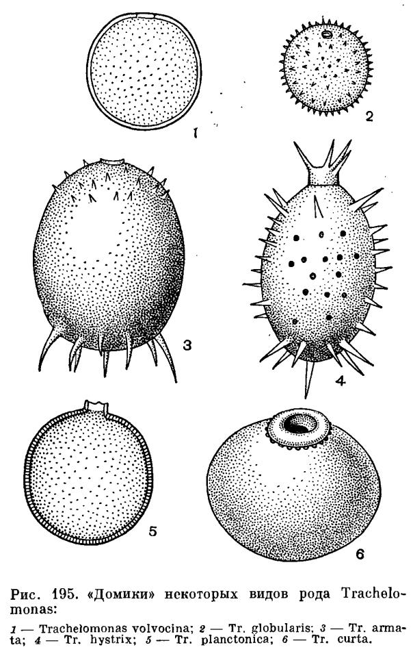 Клетка водорослей