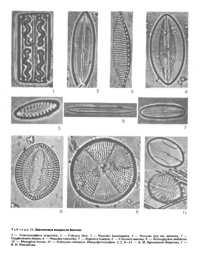 Экологические особенности и географическое распространение диатомовых водорослей