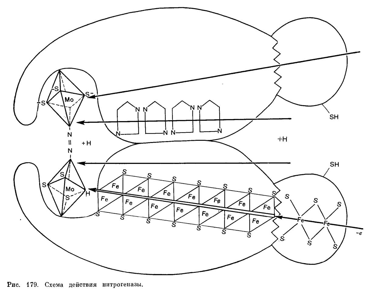 Механизм биологической фиксации молекулярного азота