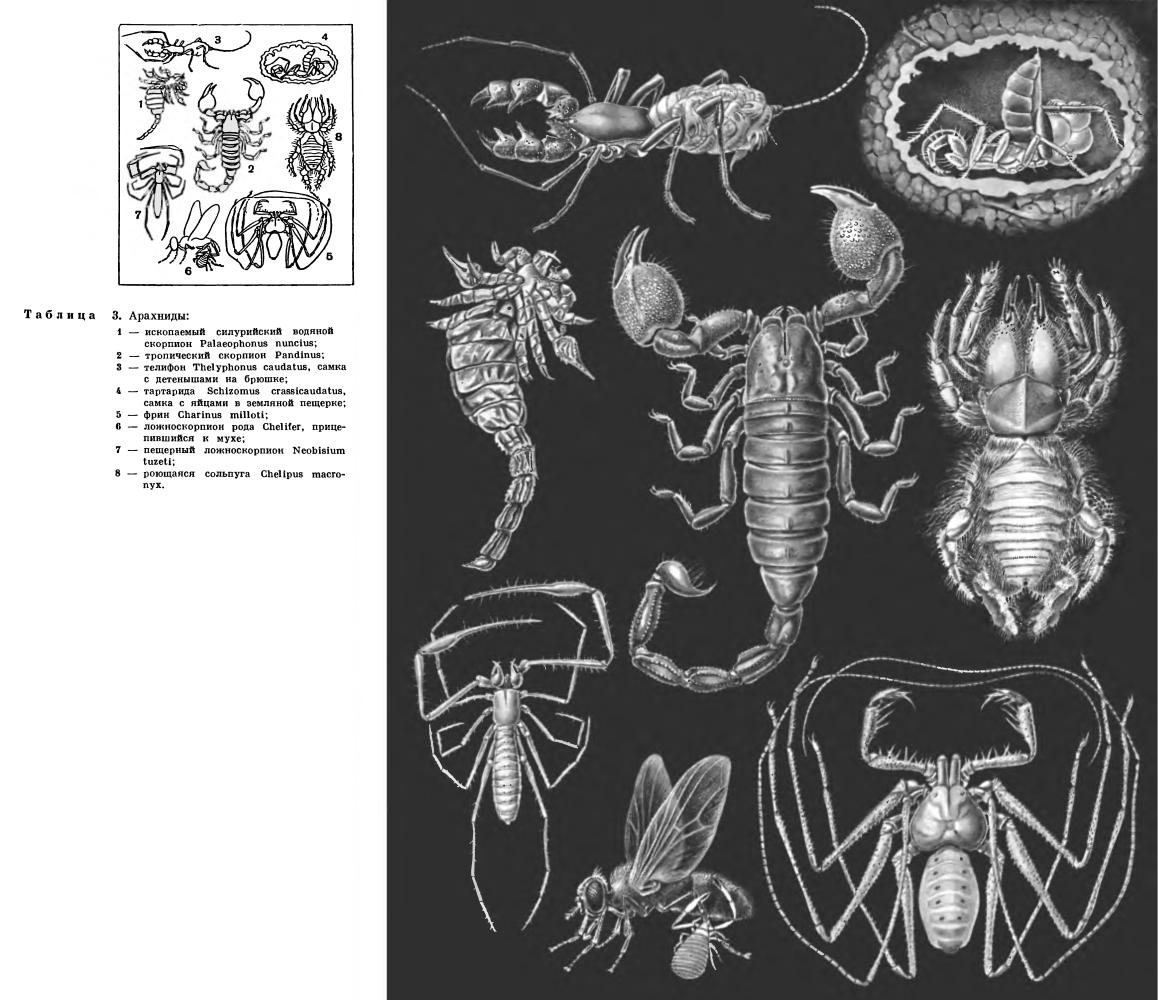 Отряд Ложноскорпионы (Pseudоscorpiones или Chelonethi)