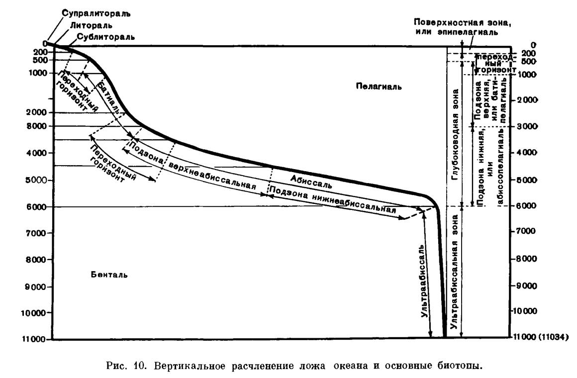 Биосфера и биоценоз