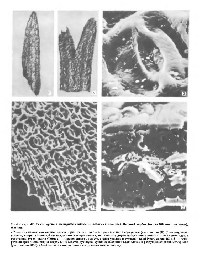 Анатомия листа