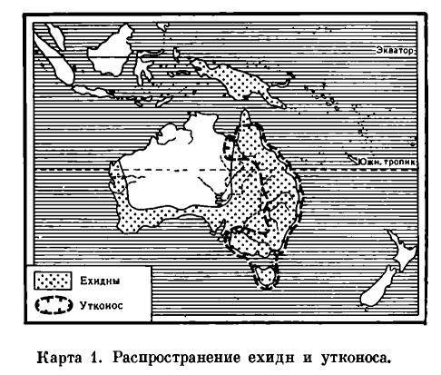 ОТРЯД ОДНОПРОХОДНЫЕ, или ЯЙЦЕКЛАДУЩИЕ (MONOTREMATA)  Карта. 6 1.