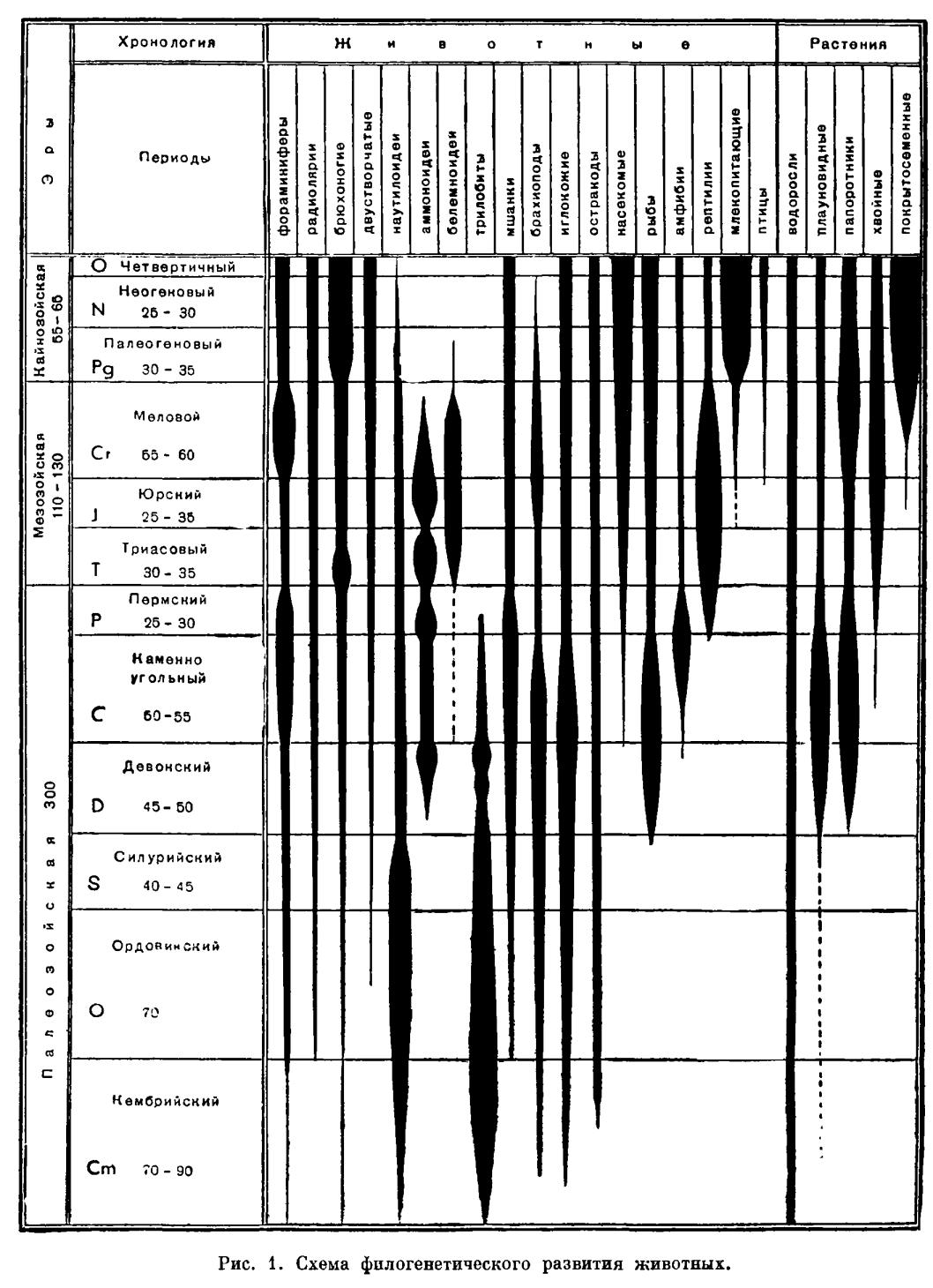 Филогения и геологическое прошлое животного мира
