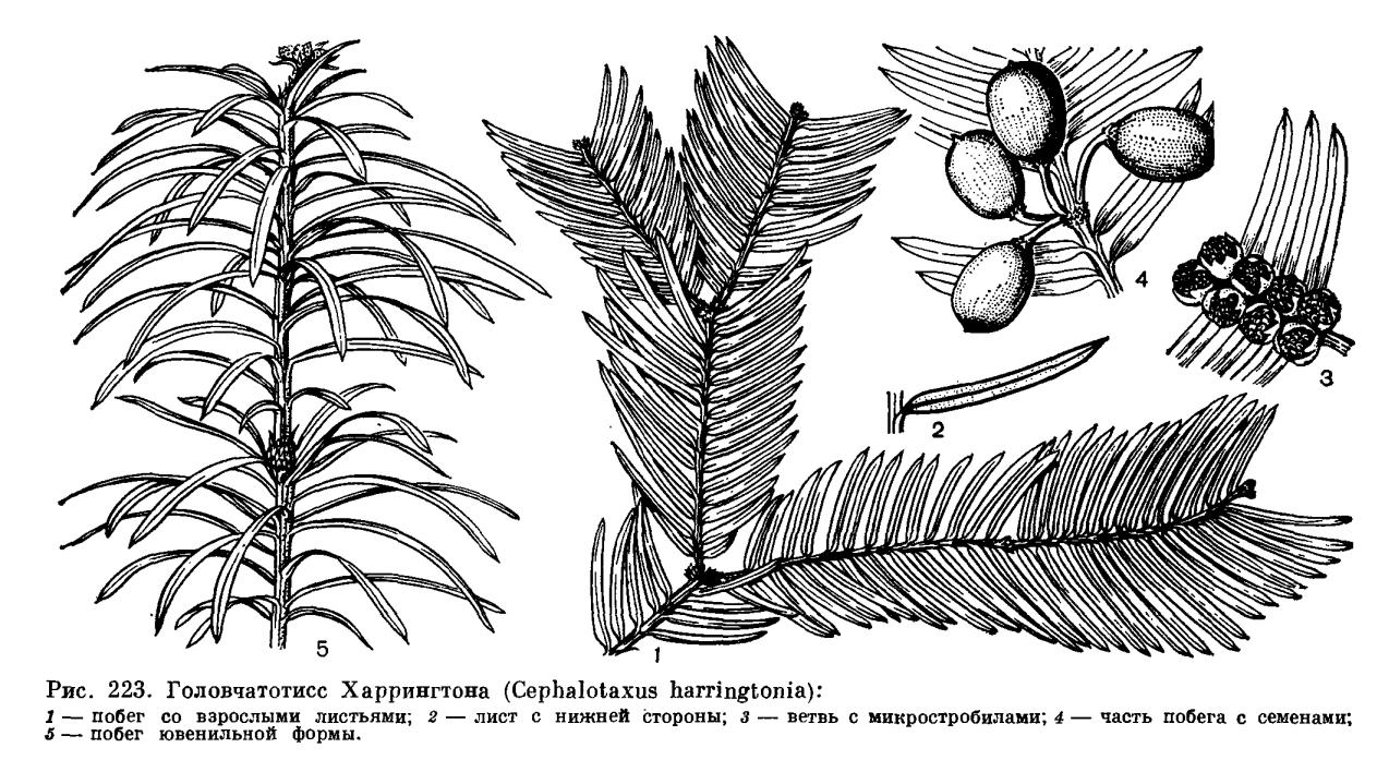 Вегетативные органы