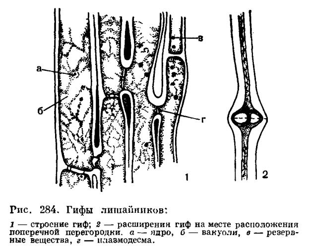 Грибной компонент (микобионт)