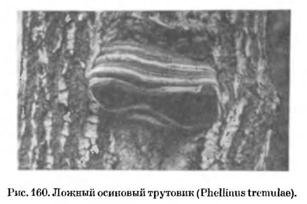Трутовые грибы