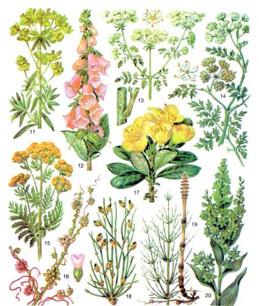 Рис.2. Ядовитые растения.