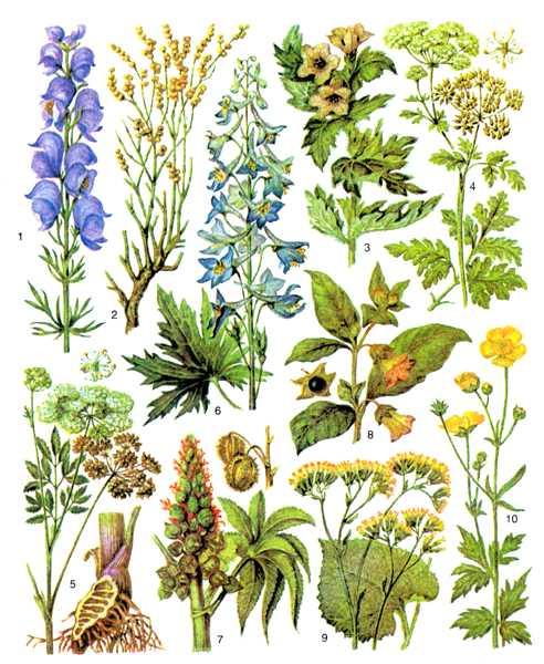 Рис.1. Ядовитые растения.