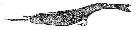 Рис. 92. Рыба, насаженная на сэт.