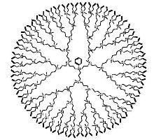 Рис. 2. Полиаллилкарбосилановый дендример пятой генерации с тетрафункциональным разветвляющим центро