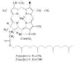 Структурная формула хлорофиллов a и b