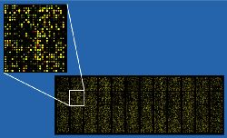 Микрочип для 40000 проб, в котором каждая точка отображена псевдоцветом в соответствии с уровнем экс