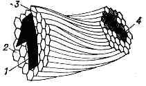 ВОЛОКОННАЯ ОПТИКА> </div> <div> Поэлементная передача изображения волоконной деталью: 1 — изображение, поданное на входной торец; 2 — светопроводящая жила; 3 — изолирующая прослойка; 4 — мозаичное изображение, переданное на выходной торец. </div> <div> элементов изображения, каждый из к-рых передаётся по своей световедущей жиле (рис.). В волоконных деталях обычно применяют стеклянное волокно, световедущая жила к-рого (сердцевина) окружена стеклом-оболочкой из др. стекла с меньшим показателем преломления. Вследствие этого на поверхности раздела сердцевины и оболочки лучи, падающие под соответствующими углами, претерпевают полное внутр. отражение и распространяются по световедущей жиле. Несмотря на <a href=