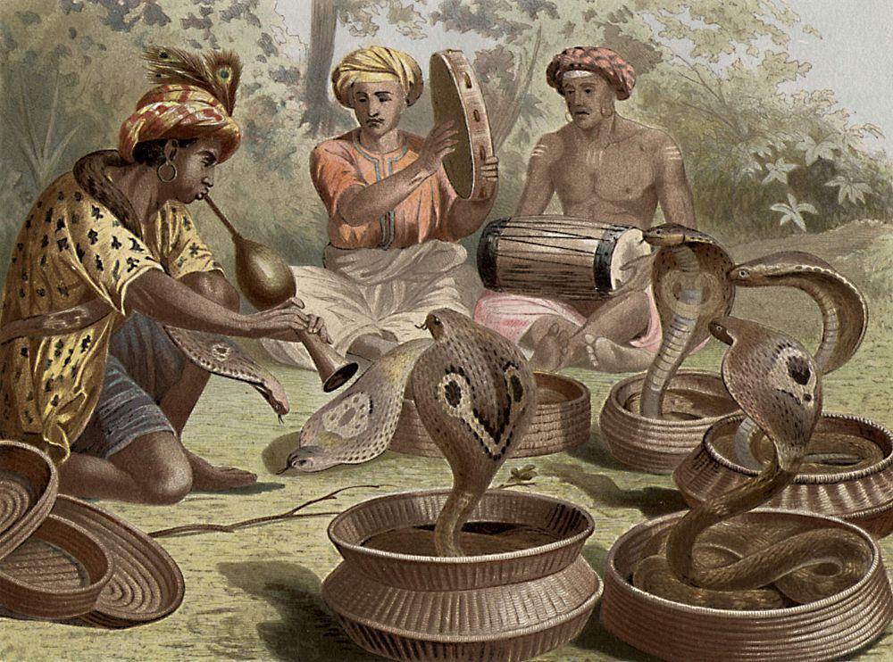 Индийская кобра, или очковая змея (Naja naja)