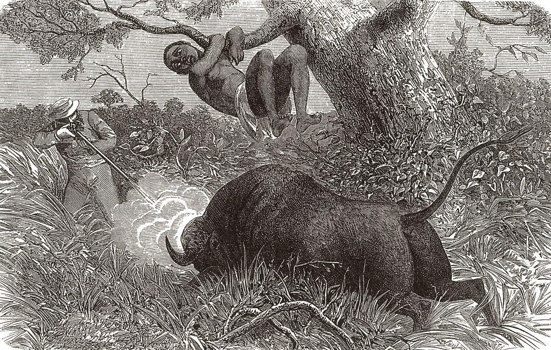 Охота на буйвола