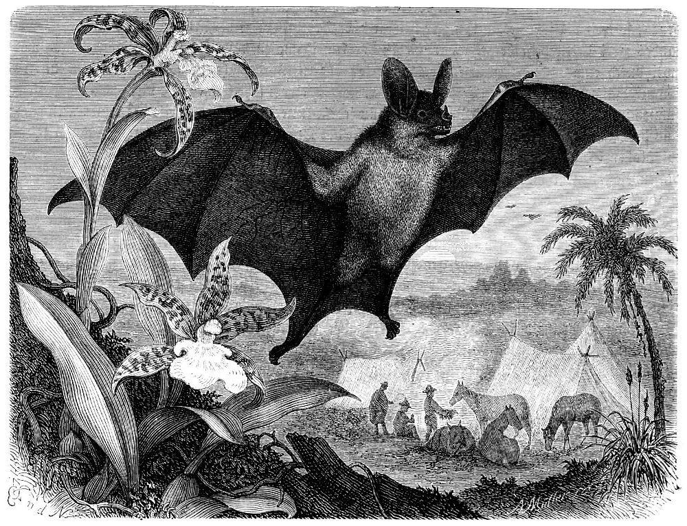 Ложный (большой) вампир (Vampyrum spectrum)