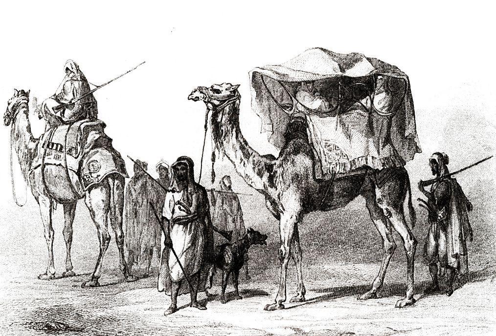Оседланные верблюды и дромедары. В таких корзинах (каффас) путешествуют женщины