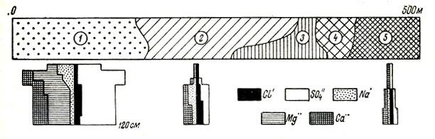 Рис. 46. Экологический ряд на шлейфе соленосного чинка (Алтын-Чокусу, Актюбинская обл.) от биюргунника на сульфатном солончаке до чернополынника на солонце: 1 - проценоз биюргуна с осочкой; 2 - биюргун с белоземельной полынью; 3 - биюргунник; 4 - чернополынный биюргунник; 5 - чернополынник (Насонова, 1968)